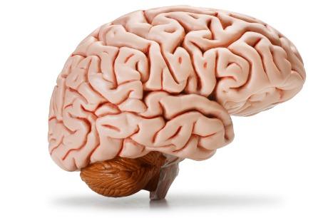 Pan Atlantic | Brain